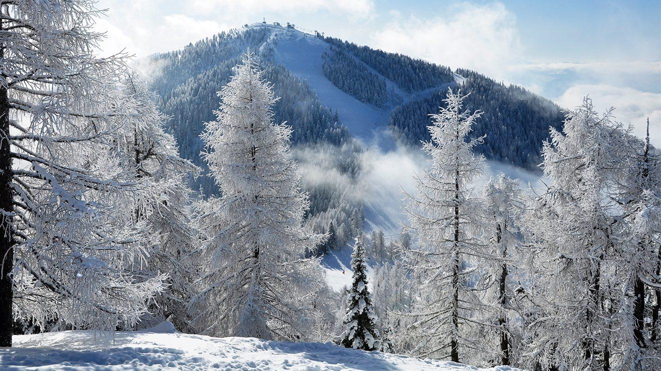 Hinter den tief verschneiten Bäumen versteckt sich die Radentheiner Streif