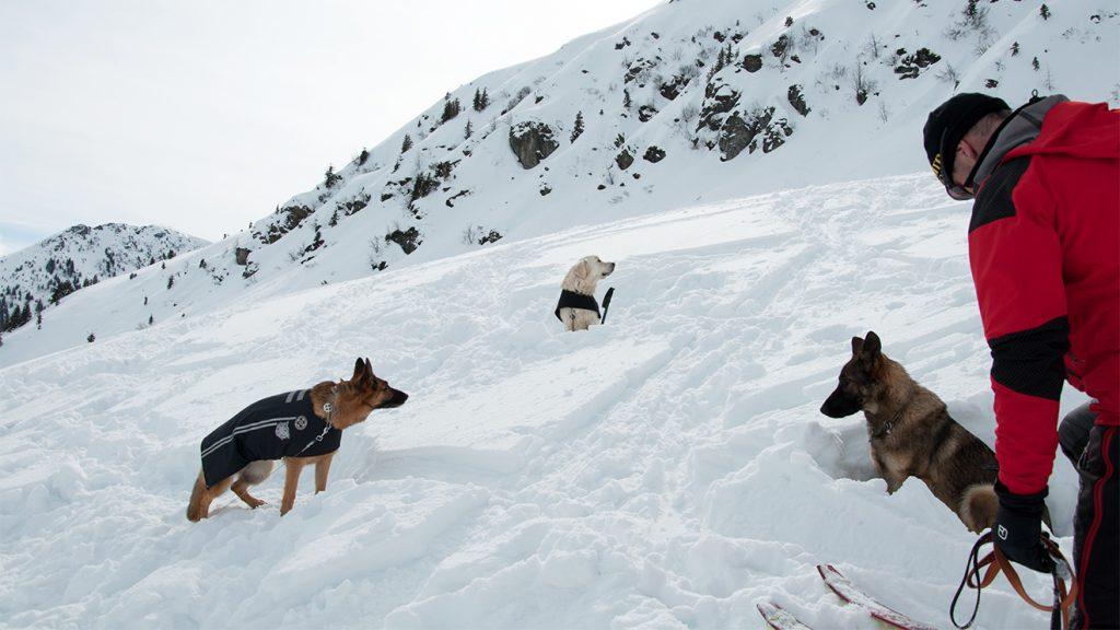 Hinter einer Kuppe warten die Lawinenhunde auf ihren (Übungs-)Einsatz © Skiing Penguin