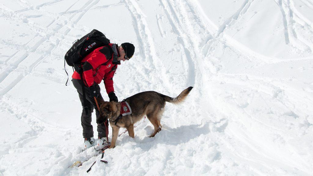 Malu bekommt von ihrem Hundeführer Stefan Fuchs die Stöberdecke angezogen © Skiing Penguin