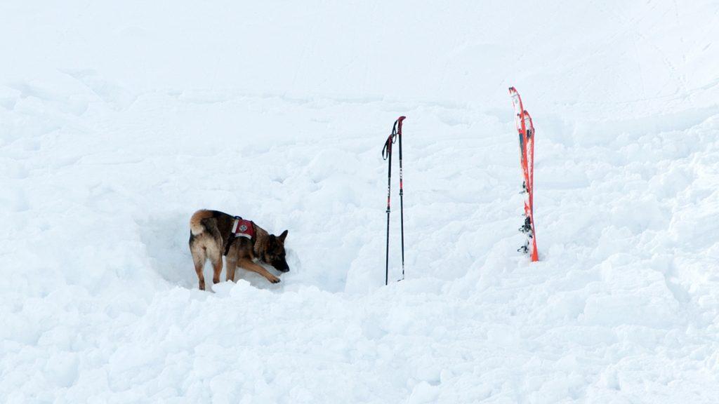 "Malu bei der ""Arbeit"" © Skiing Penguin"