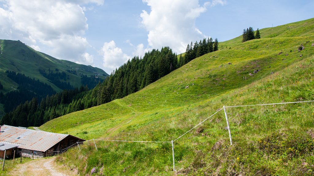 Das hellgrüne Gras (rechts der Ehrenbachalm) zeigt, wo im Winter die Piste über die Asten verläuft © Skiing Penguin