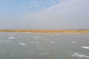 Winteridylle am Neusiedler See @ Richter